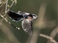 Dolgorepka_Long_tailed_tit_23.jpg